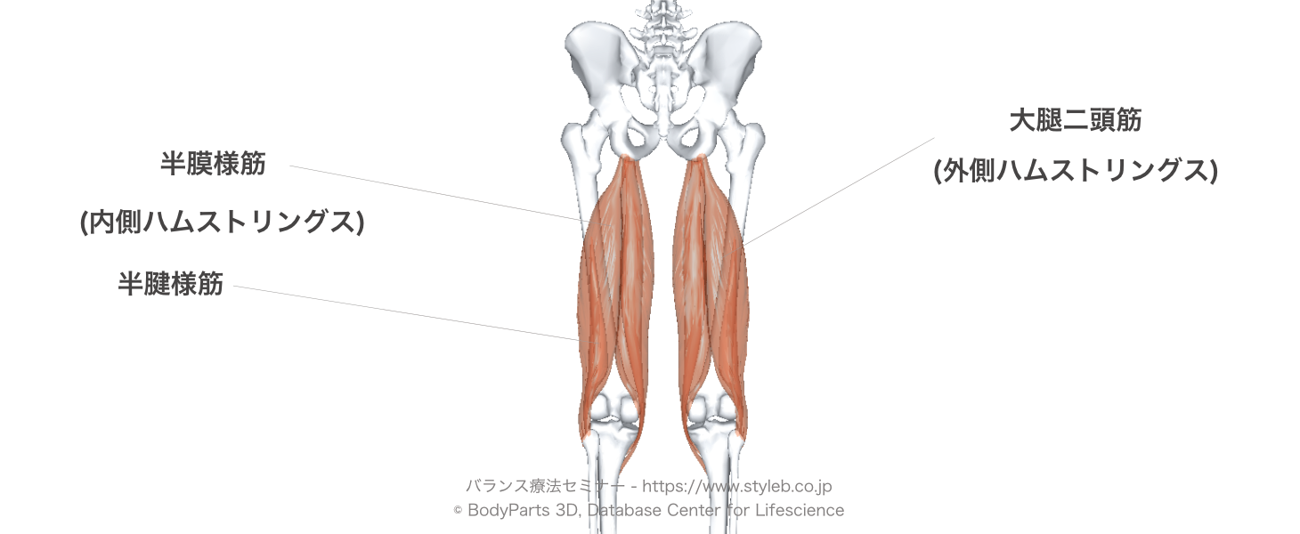 腓腹筋 膝 関節 屈曲 位